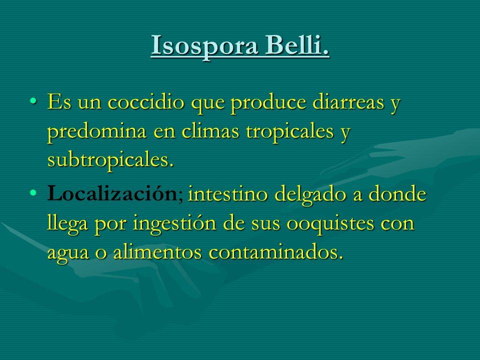 Isospora Belli. Es un coccidio que produce diarreas y predomina en climas tropicales y subtropicales.Es un coccidio que produce diarreas y predomina e