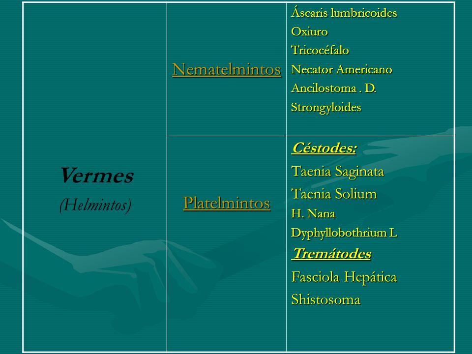 Vermes (Helmintos)Nematelmintos Áscaris lumbricoides OxiuroTricocéfalo Necator Americano Ancilostoma. D. Strongyloides PlatelmintosCéstodes: Taenia Sa
