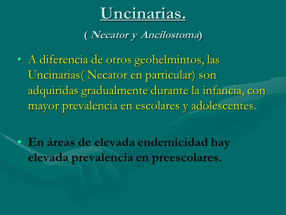Uncinarias. ( Necator y Ancilostoma) A diferencia de otros geohelmintos, las Uncinarias( Necator en particular) son adquiridas gradualmente durante la