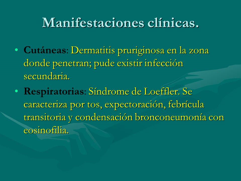 Manifestaciones clínicas. Dermatitis pruriginosa en la zona donde penetran; pude existir infección secundaria.Cutáneas: Dermatitis pruriginosa en la z