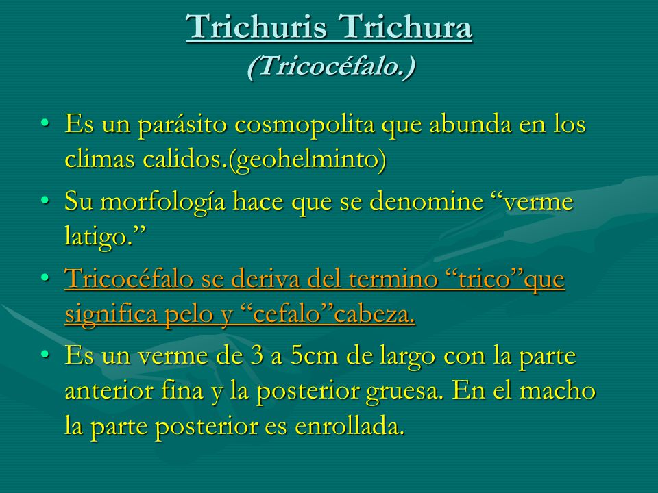 Trichuris Trichura (Tricocéfalo.) Es un parásito cosmopolita que abunda en los climas calidos.(geohelminto)Es un parásito cosmopolita que abunda en los climas calidos.(geohelminto) Su morfología hace que se denomine verme latigo.Su morfología hace que se denomine verme latigo.