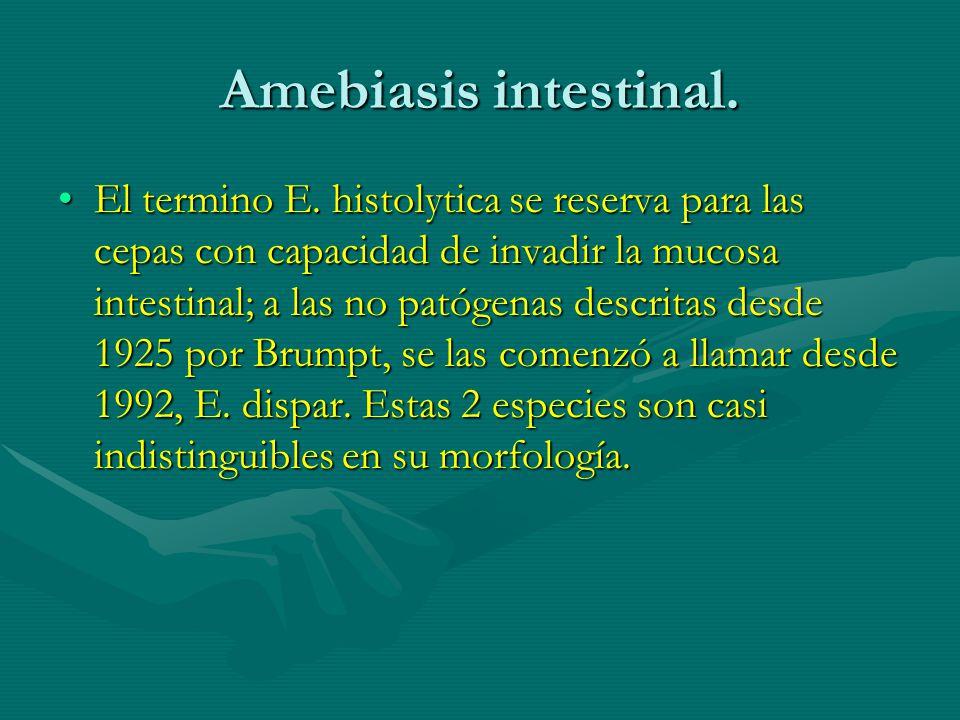 Amebiasis intestinal. El termino E. histolytica se reserva para las cepas con capacidad de invadir la mucosa intestinal; a las no patógenas descritas