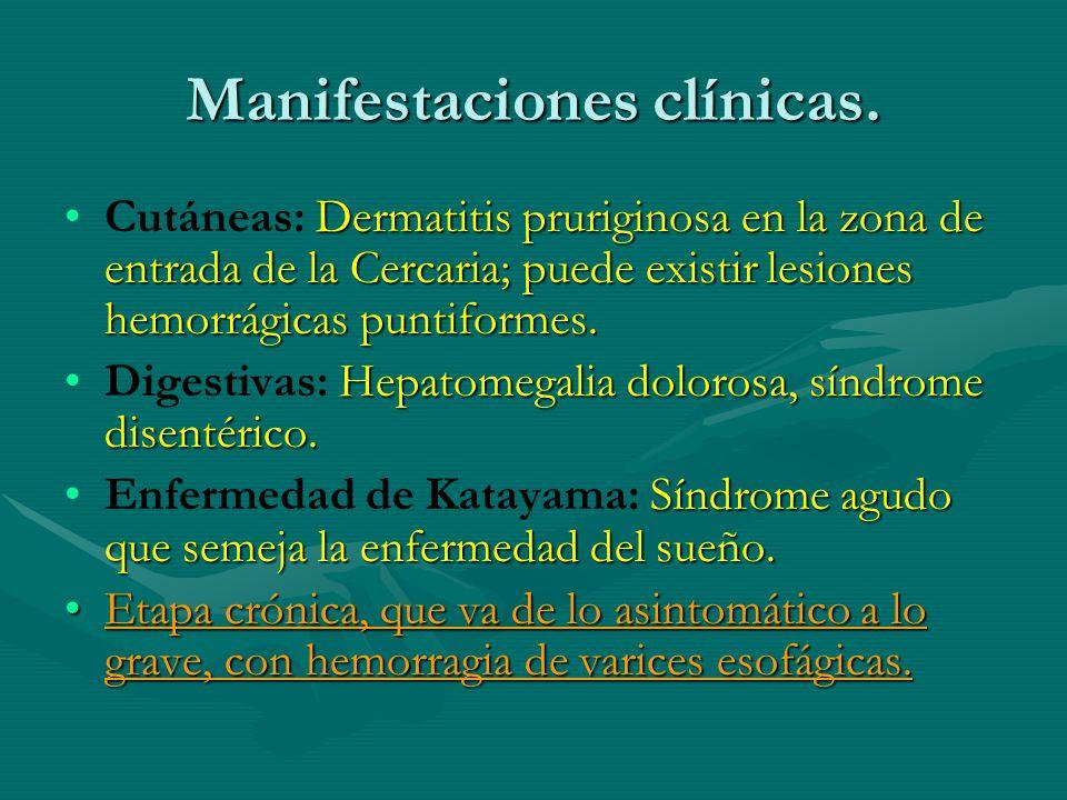 Manifestaciones clínicas. Dermatitis pruriginosa en la zona de entrada de la Cercaria; puede existir lesiones hemorrágicas puntiformes.Cutáneas: Derma