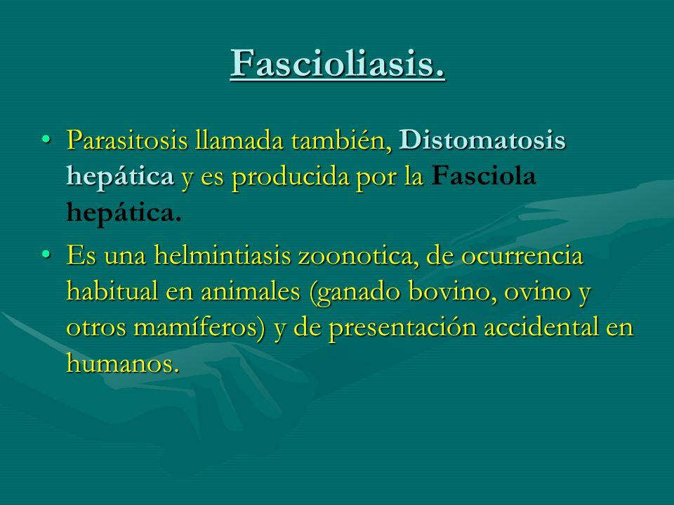 Fascioliasis. Parasitosis llamada también, Distomatosis hepática y es producida por laParasitosis llamada también, Distomatosis hepática y es producid