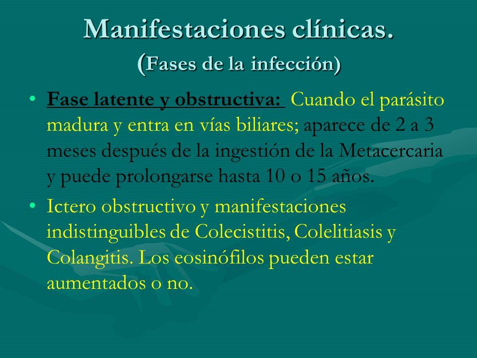Manifestaciones clínicas. ( Fases de la infección) Fase latente y obstructiva: Cuando el parásito madura y entra en vías biliares; aparece de 2 a 3 me