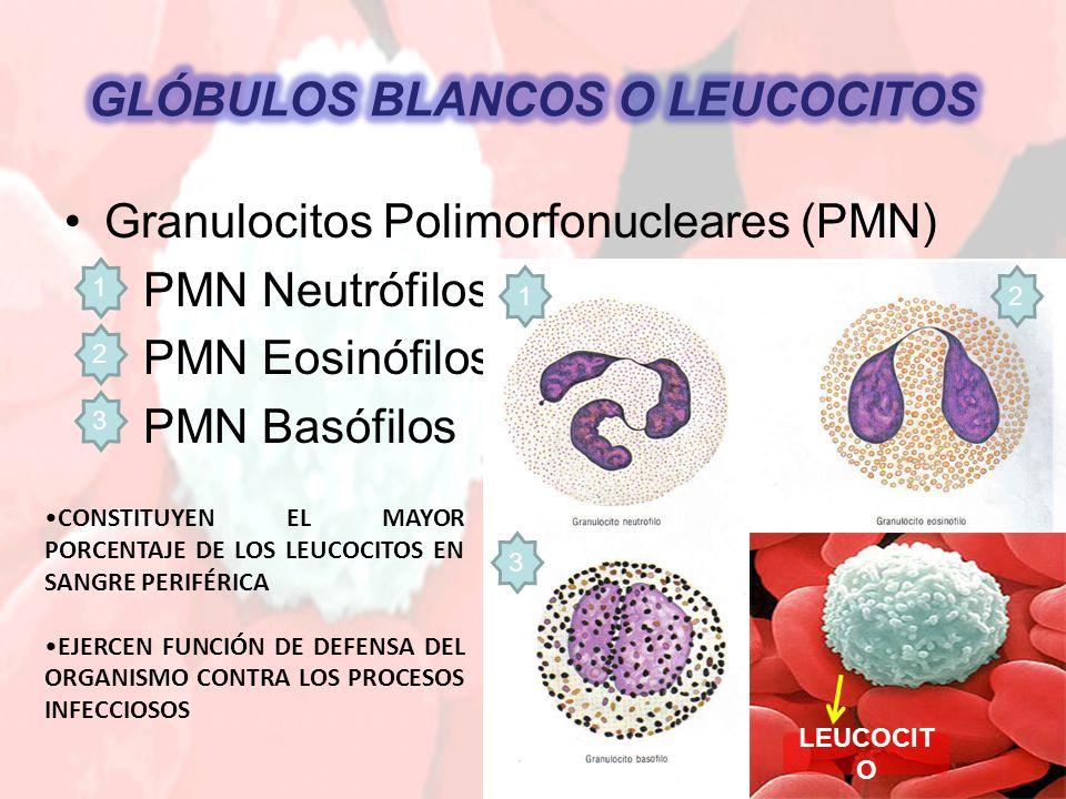 Granulocitos Polimorfonucleares (PMN) PMN Neutrófilos PMN Eosinófilos PMN Basófilos 12 3 LEUCOCIT O 1 2 3 CONSTITUYEN EL MAYOR PORCENTAJE DE LOS LEUCOCITOS EN SANGRE PERIFÉRICA EJERCEN FUNCIÓN DE DEFENSA DEL ORGANISMO CONTRA LOS PROCESOS INFECCIOSOS