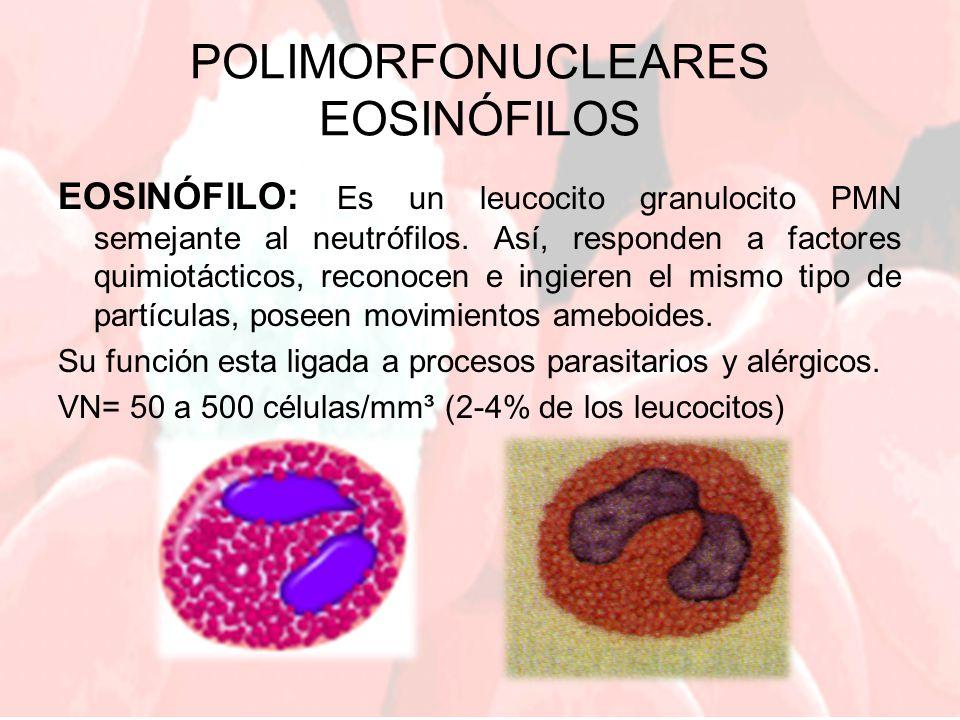 POLIMORFONUCLEARES EOSINÓFILOS EOSINÓFILO: Es un leucocito granulocito PMN semejante al neutrófilos. Así, responden a factores quimiotácticos, reconoc