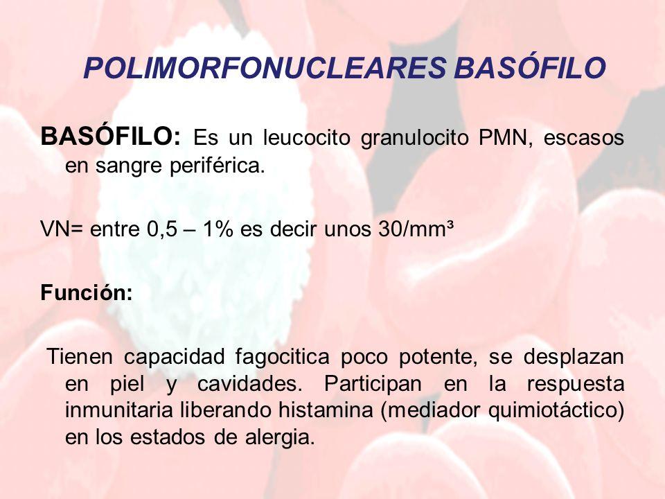 BASÓFILO: Es un leucocito granulocito PMN, escasos en sangre periférica. VN= entre 0,5 – 1% es decir unos 30/mm³ Función: Tienen capacidad fagocitica