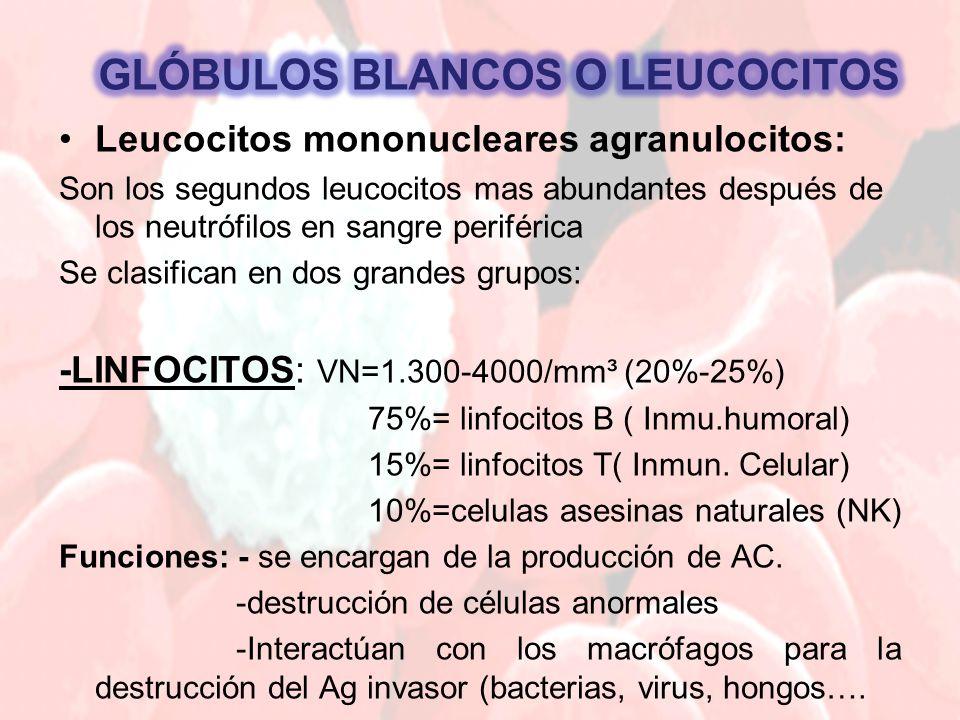 Leucocitos mononucleares agranulocitos: Son los segundos leucocitos mas abundantes después de los neutrófilos en sangre periférica Se clasifican en dos grandes grupos: -LINFOCITOS: VN=1.300-4000/mm³ (20%-25%) 75%= linfocitos B ( Inmu.humoral) 15%= linfocitos T( Inmun.