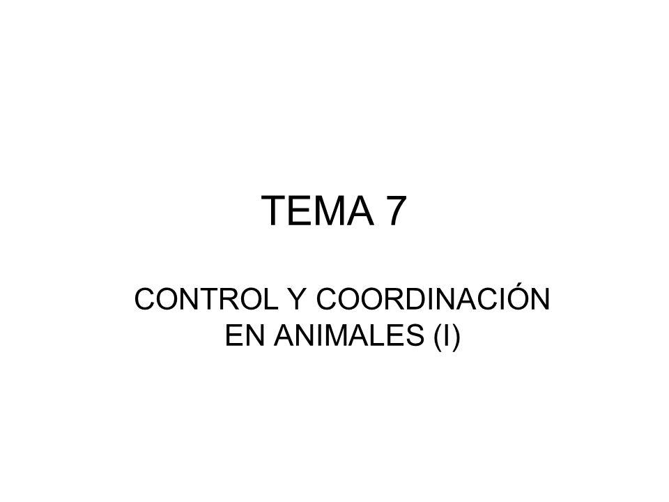 TEMA 7 CONTROL Y COORDINACIÓN EN ANIMALES (I)