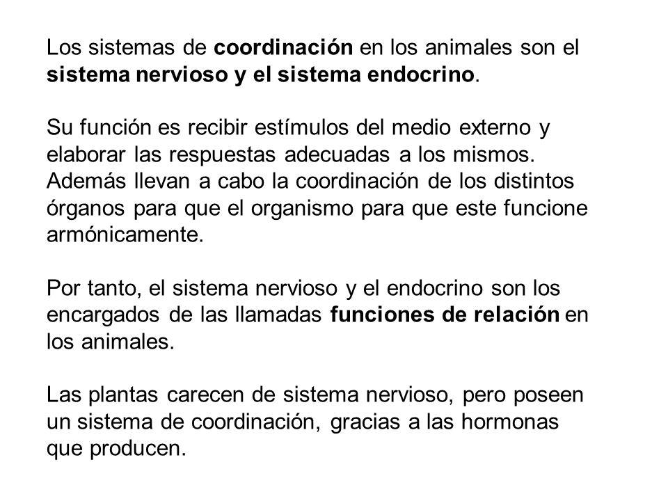 Los sistemas de coordinación en los animales son el sistema nervioso y el sistema endocrino. Su función es recibir estímulos del medio externo y elabo