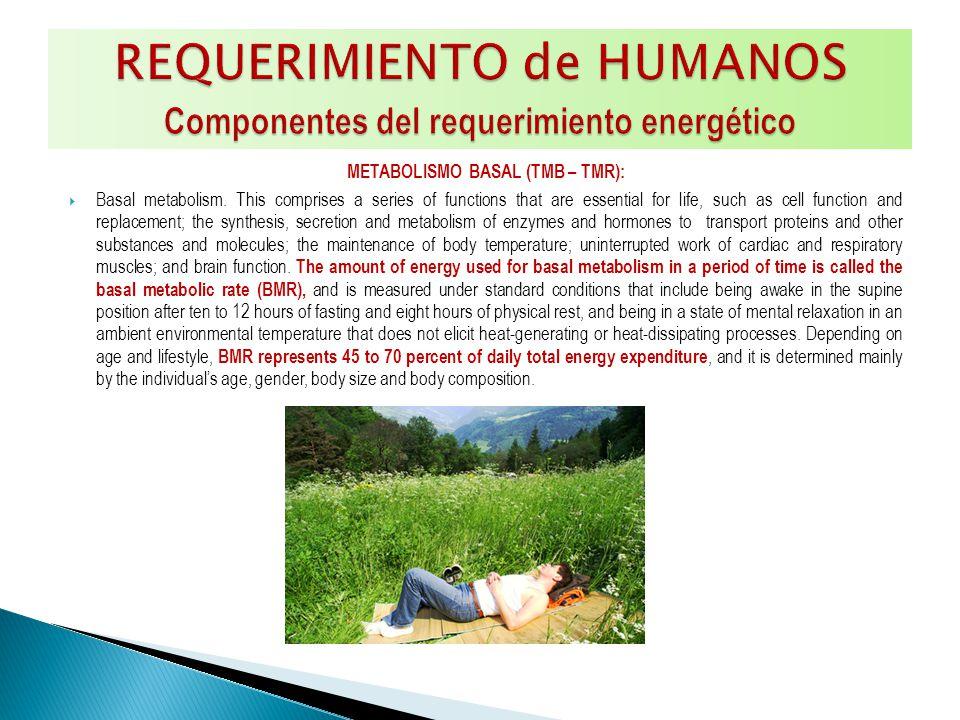 EFECTO TERMICO DEL ALIMENTO (ETA): Metabolic response to food.