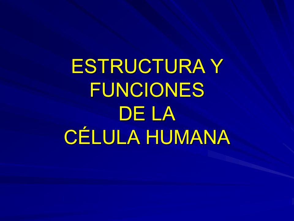 PRIMERA PARTE Definición de célula humana Partes fundamentales Composición físico-química