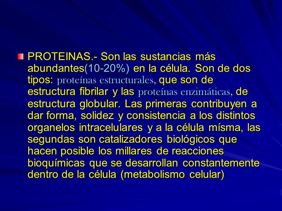PROTEINAS.- Son las sustancias más abundantes(10-20%) en la célula. Son de dos tipos: proteínas estructurales, que son de estructura fibrilar y las pr