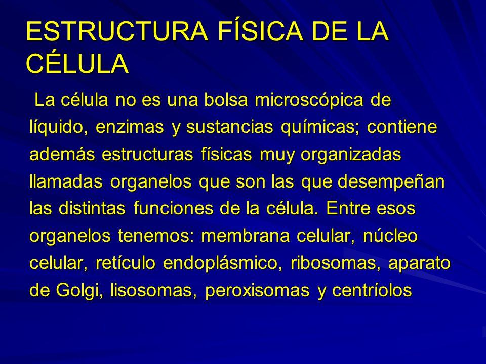 ESTRUCTURA FÍSICA DE LA CÉLULA La célula no es una bolsa microscópica de La célula no es una bolsa microscópica de líquido, enzimas y sustancias quími