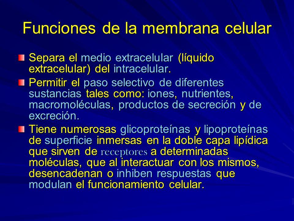 Funciones de la membrana celular Separa el medio extracelular (líquido extracelular) del intracelular. Permitir el paso selectivo de diferentes sustan