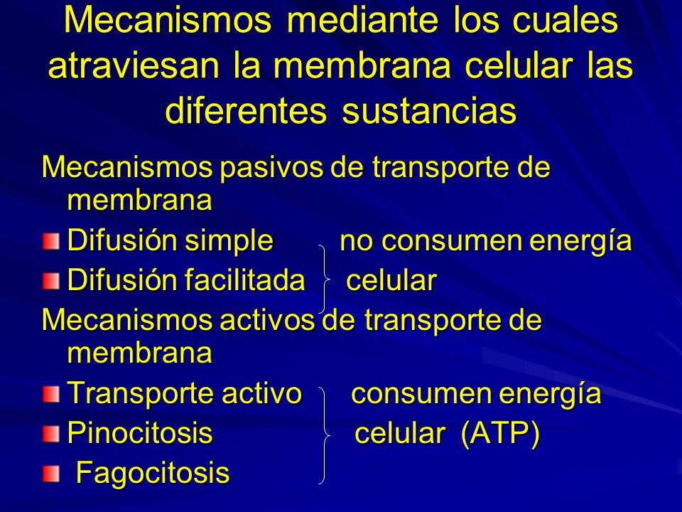 Mecanismos mediante los cuales atraviesan la membrana celular las diferentes sustancias Mecanismos pasivos de transporte de membrana Difusión simple n