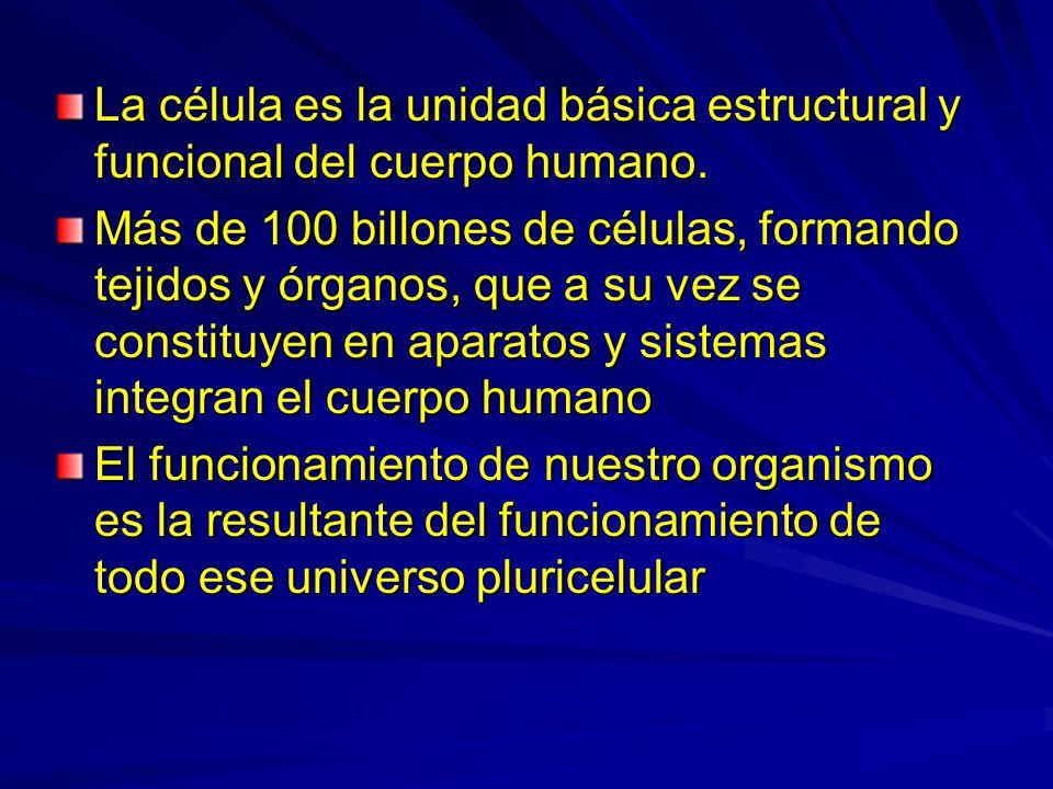 La célula es la unidad básica estructural y funcional del cuerpo humano. Más de 100 billones de células, formando tejidos y órganos, que a su vez se c