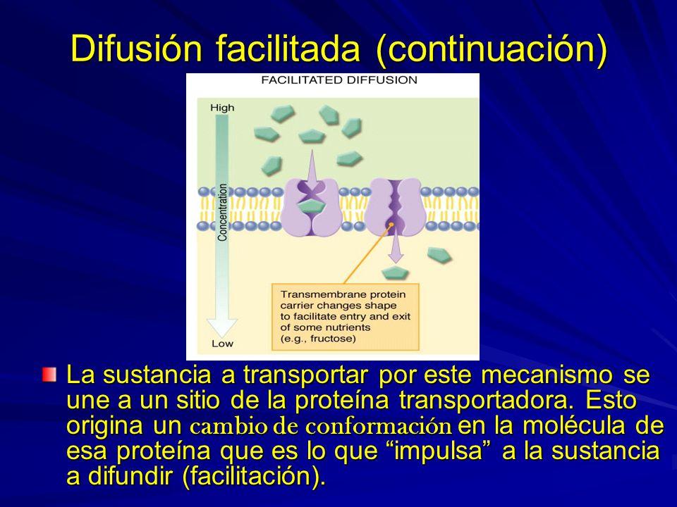 Difusión facilitada (continuación) La sustancia a transportar por este mecanismo se une a un sitio de la proteína transportadora. Esto origina un camb