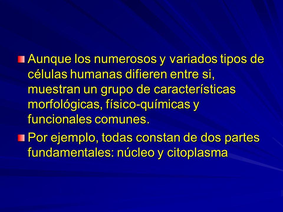 Aunque los numerosos y variados tipos de células humanas difieren entre si, muestran un grupo de características morfológicas, físico-químicas y funci
