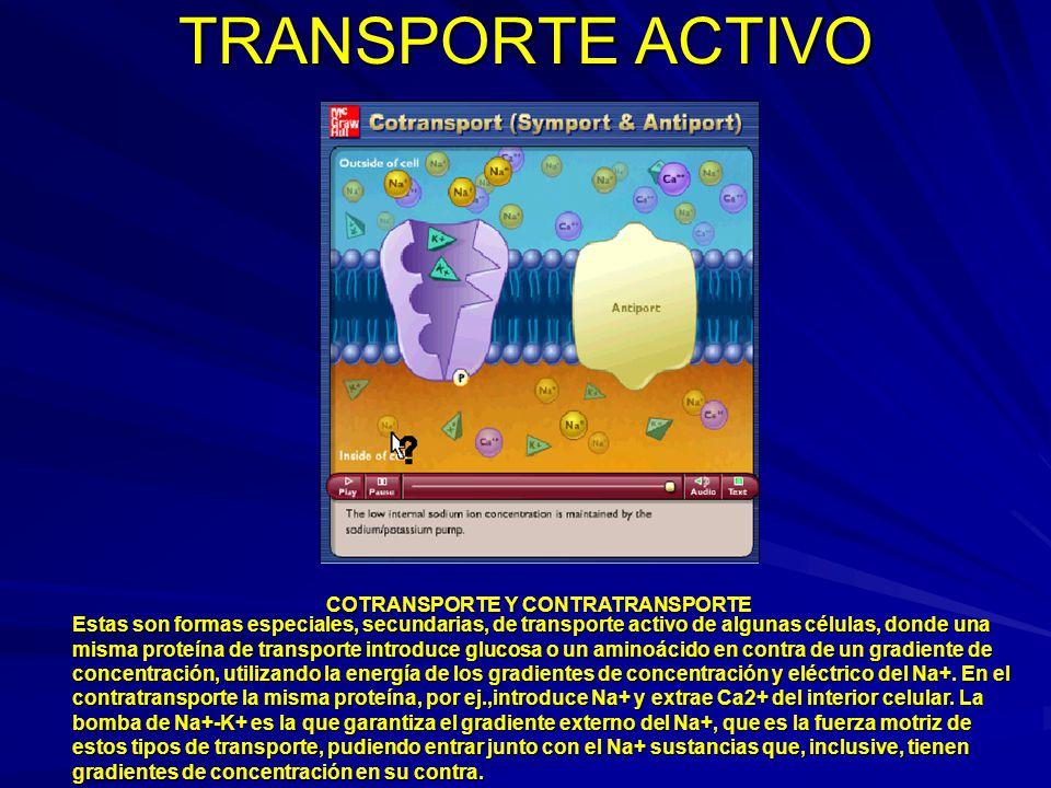 TRANSPORTE ACTIVO COTRANSPORTE Y CONTRATRANSPORTE Estas son formas especiales, secundarias, de transporte activo de algunas células, donde una misma p