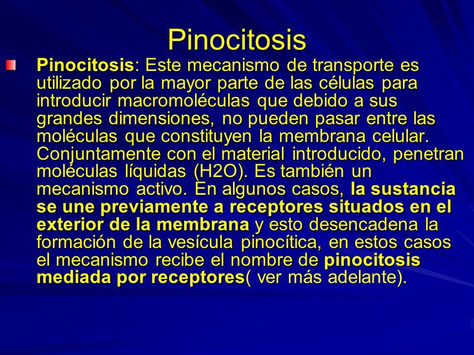 Pinocitosis Pinocitosis: Este mecanismo de transporte es utilizado por la mayor parte de las células para introducir macromoléculas que debido a sus g