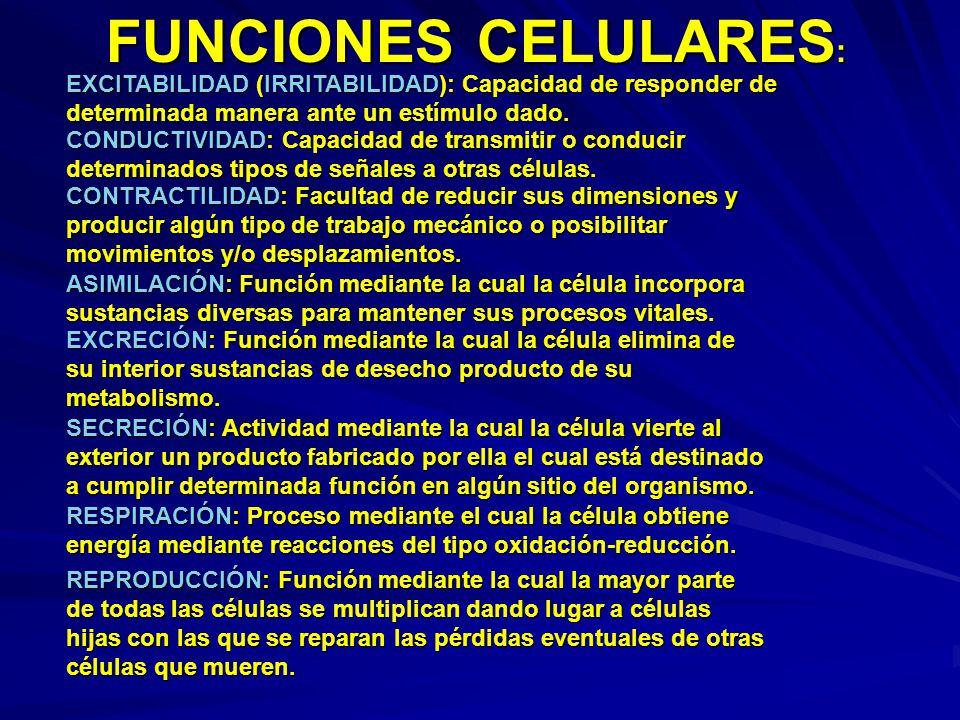 FUNCIONES CELULARES : EXCITABILIDAD (IRRITABILIDAD): Capacidad de responder de determinada manera ante un estímulo dado. CONDUCTIVIDAD: Capacidad de t