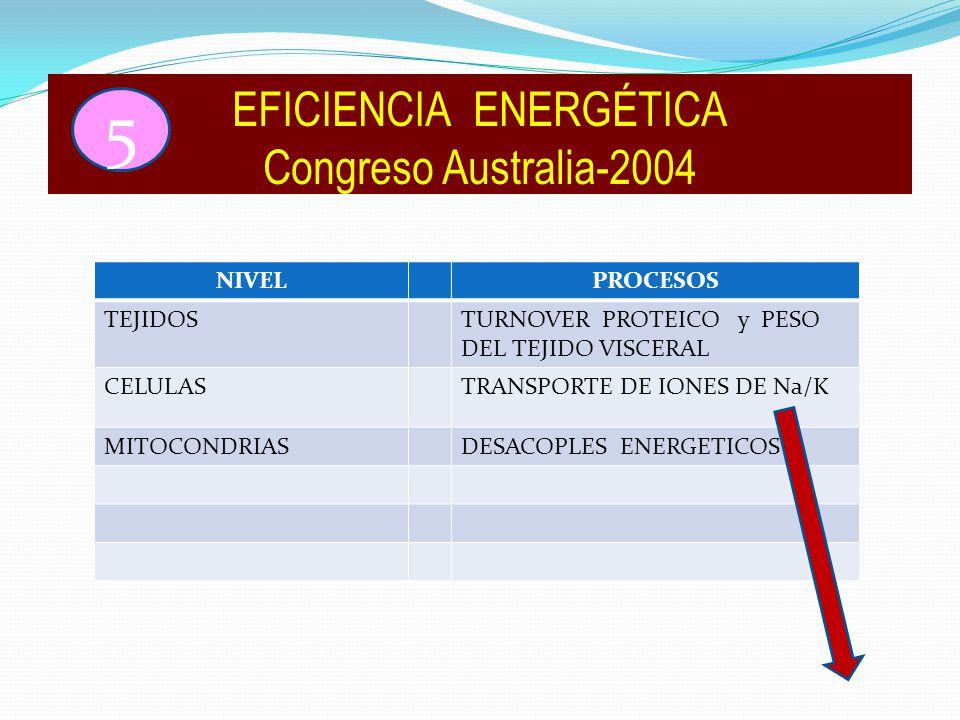 NIVELPROCESOS TEJIDOSTURNOVER PROTEICO y PESO DEL TEJIDO VISCERAL CELULASTRANSPORTE DE IONES DE Na/K MITOCONDRIASDESACOPLES ENERGETICOS EFICIENCIA ENERGÉTICA Congreso Australia-2004 5