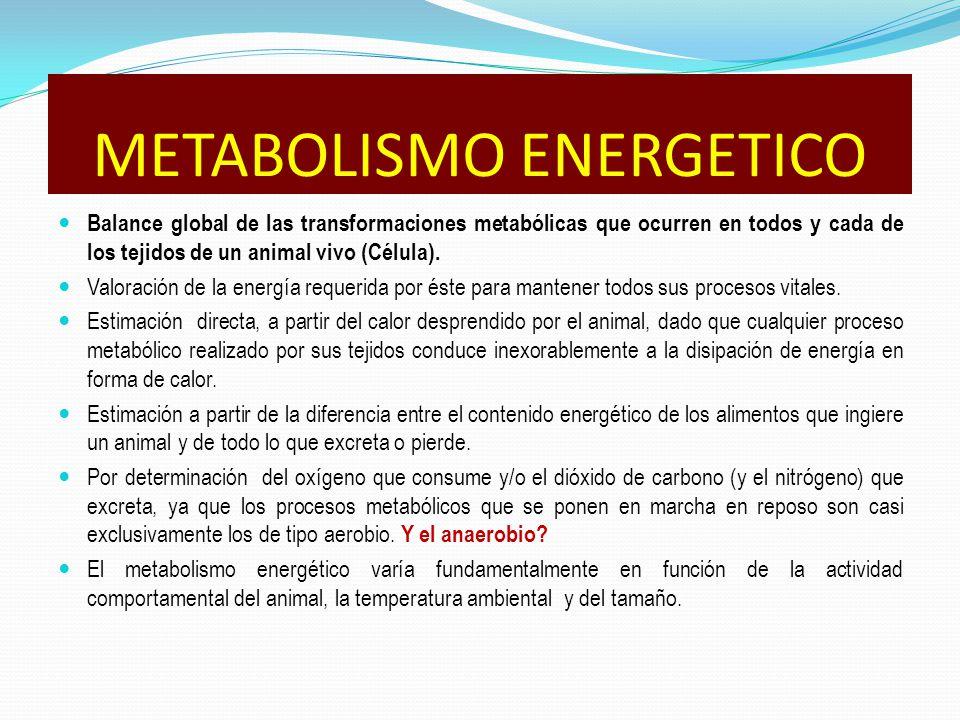 METABOLISMO ENERGETICO Balance global de las transformaciones metabólicas que ocurren en todos y cada de los tejidos de un animal vivo (Célula).