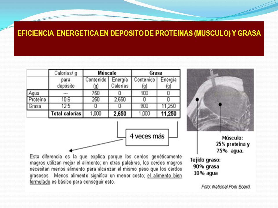EFICIENCIA ENERGETICA EN DEPOSITO DE PROTEINAS (MUSCULO) Y GRASA