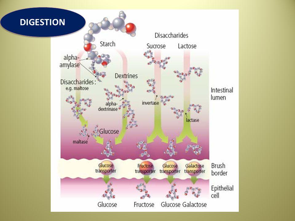 UTILIZACION DE LA GLUCOSA POR EL SISTEMA NERVIOSO CENTRAL Las células del SNC son absolutamente dependientes del suministro constante de glucosa.