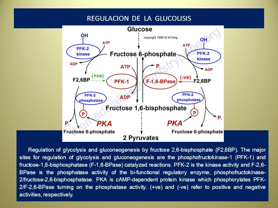 REGULACION DE LA GLUCOLISIS Regulation of glycolysis and gluconeogenesis by fructose 2,6-bisphosphate (F2,6BP). The major sites for regulation of glyc