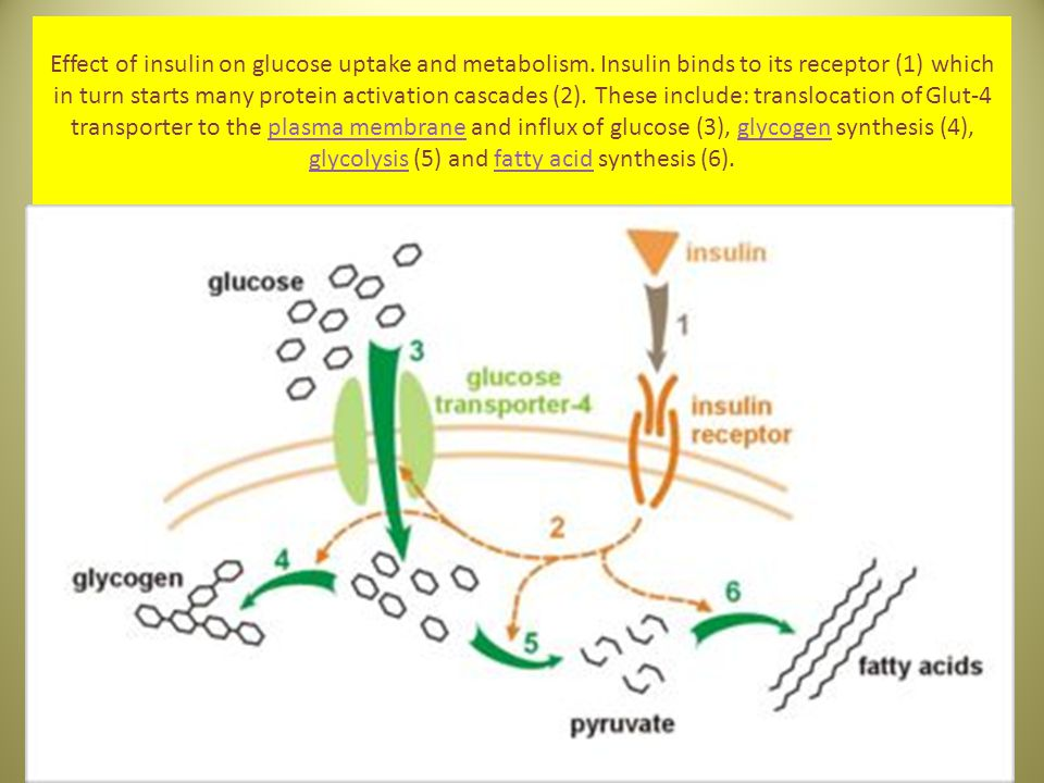 Effect of insulin on glucose uptake and metabolism. Insulin binds to its receptor (1) which in turn starts many protein activation cascades (2). These