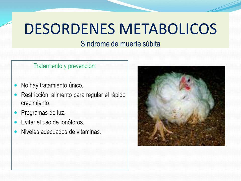Anticoccidiales ionóforos Dietas con carbohidratos como fuente de energía. Alta densidad de la dieta Bajos niveles de calcio Lactato deshidrogenasa. N