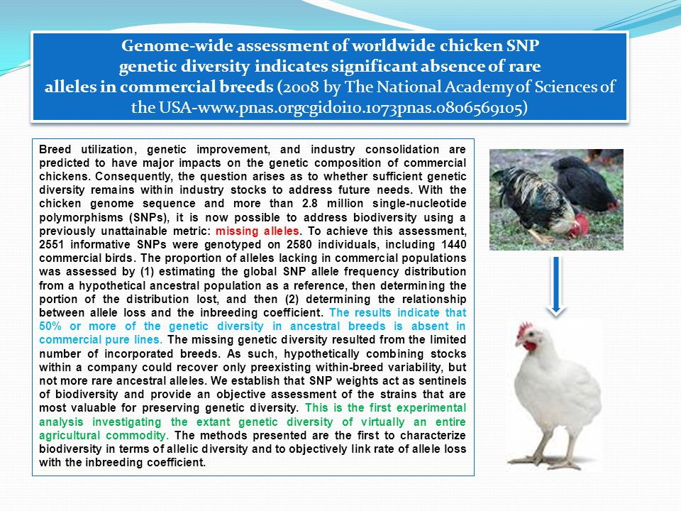 Breed utilization, genetic improvement, and industry consolidation are predicted to have major impacts on the genetic composition of commercial chickens.