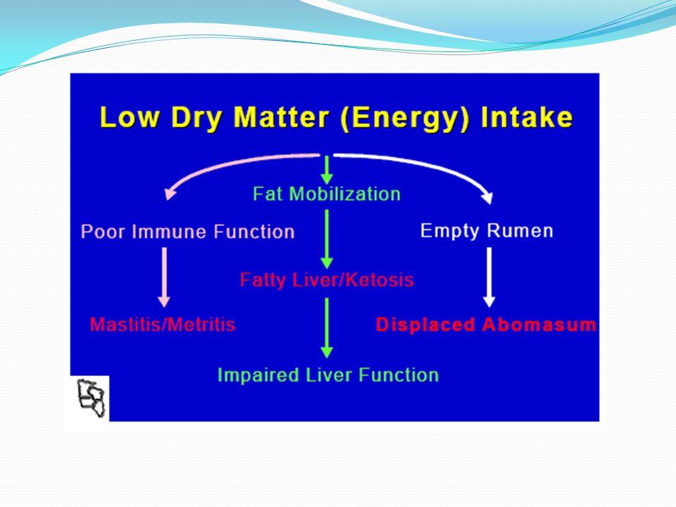 Hipoglucemia. Vacas lecheras (10-60 días después del parto) 1) Síntomas: Pérdida de peso / pérdida de apetito Disminución severa en la producción de l