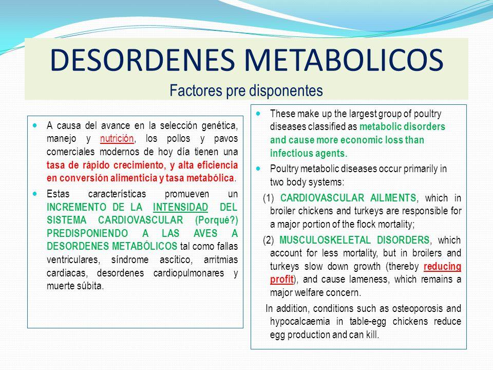 Son precipitados por muchos factores: Medio ambiente, ingredientes alimenticios, y principalmente por un metabolismo y productividad incrementada: * P