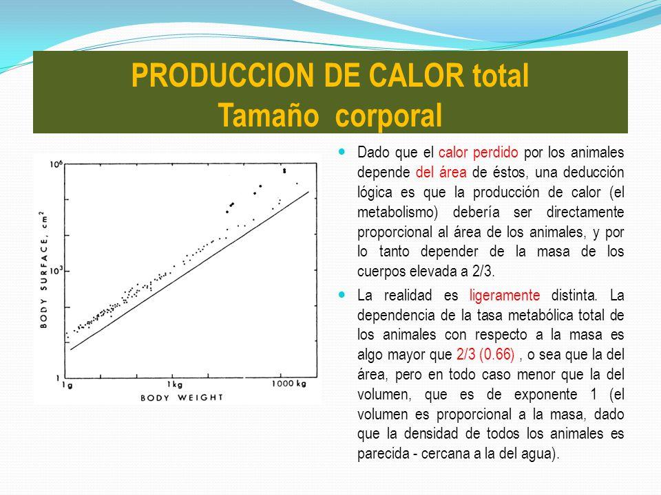Dado que el calor perdido por los animales depende del área de éstos, una deducción lógica es que la producción de calor (el metabolismo) debería ser