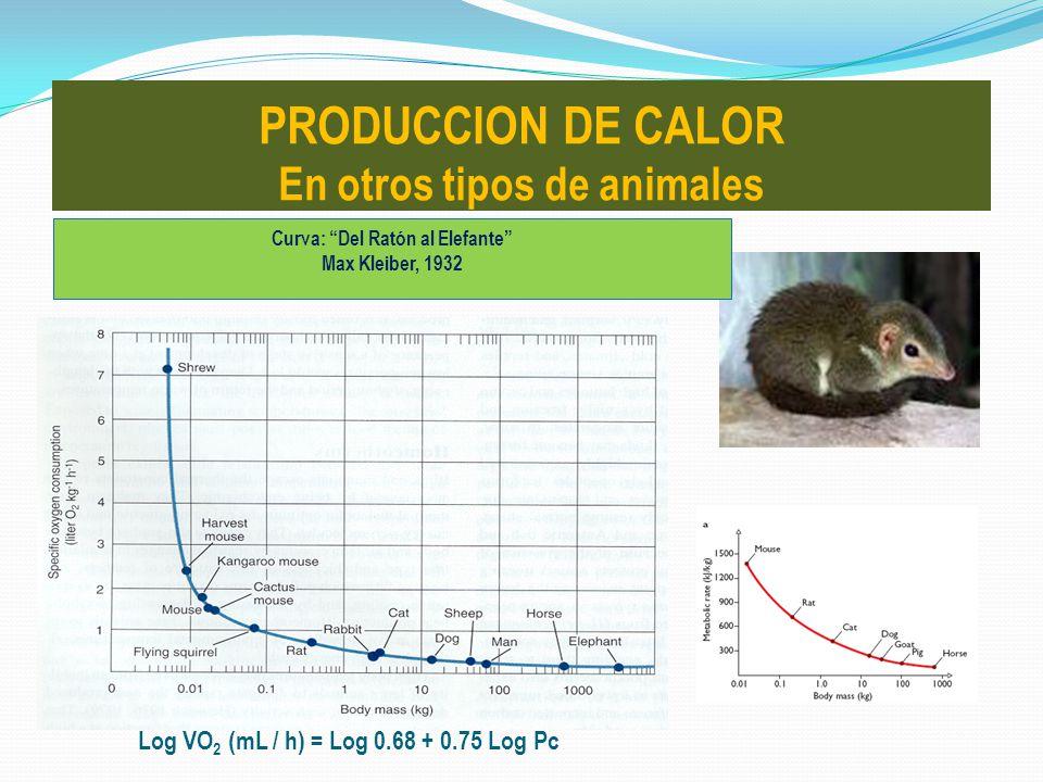 PRODUCCION DE CALOR En otros tipos de animales Curva: Del Ratón al Elefante Max Kleiber, 1932 Log VO 2 (mL / h) = Log 0.68 + 0.75 Log Pc