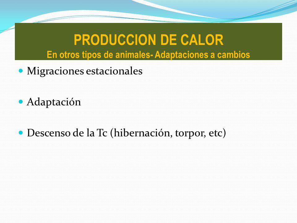 Migraciones estacionales Adaptación Descenso de la Tc (hibernación, torpor, etc) PRODUCCION DE CALOR En otros tipos de animales- Adaptaciones a cambio