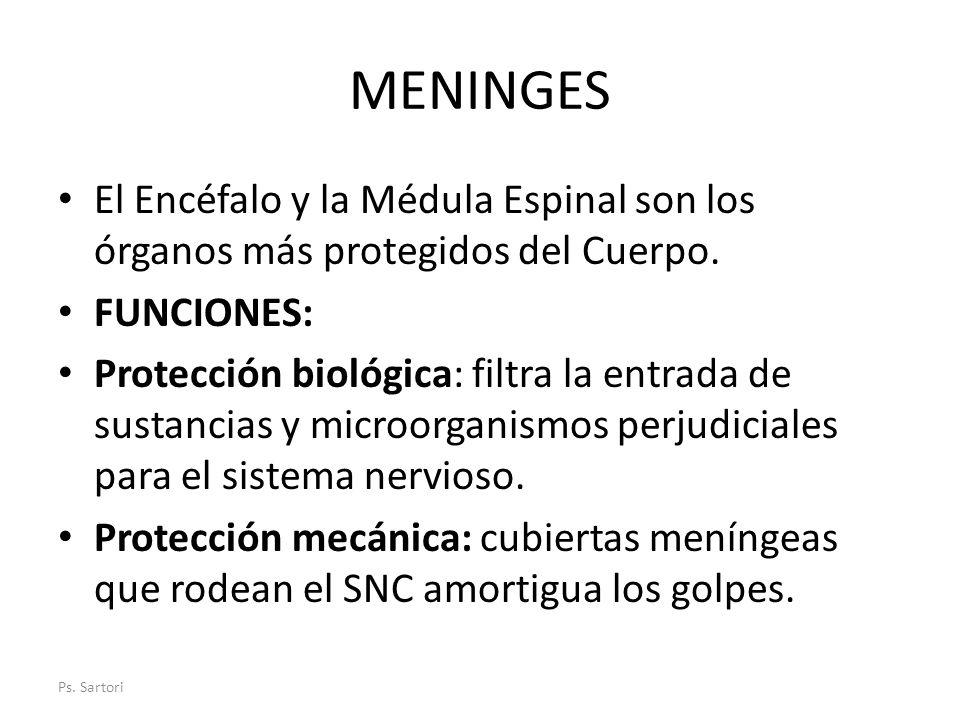 MENINGES El Encéfalo y la Médula Espinal son los órganos más protegidos del Cuerpo. FUNCIONES: Protección biológica: filtra la entrada de sustancias y