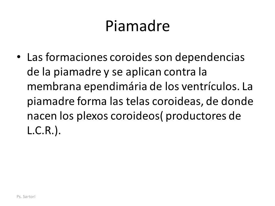 Piamadre Las formaciones coroides son dependencias de la piamadre y se aplican contra la membrana ependimária de los ventrículos. La piamadre forma la