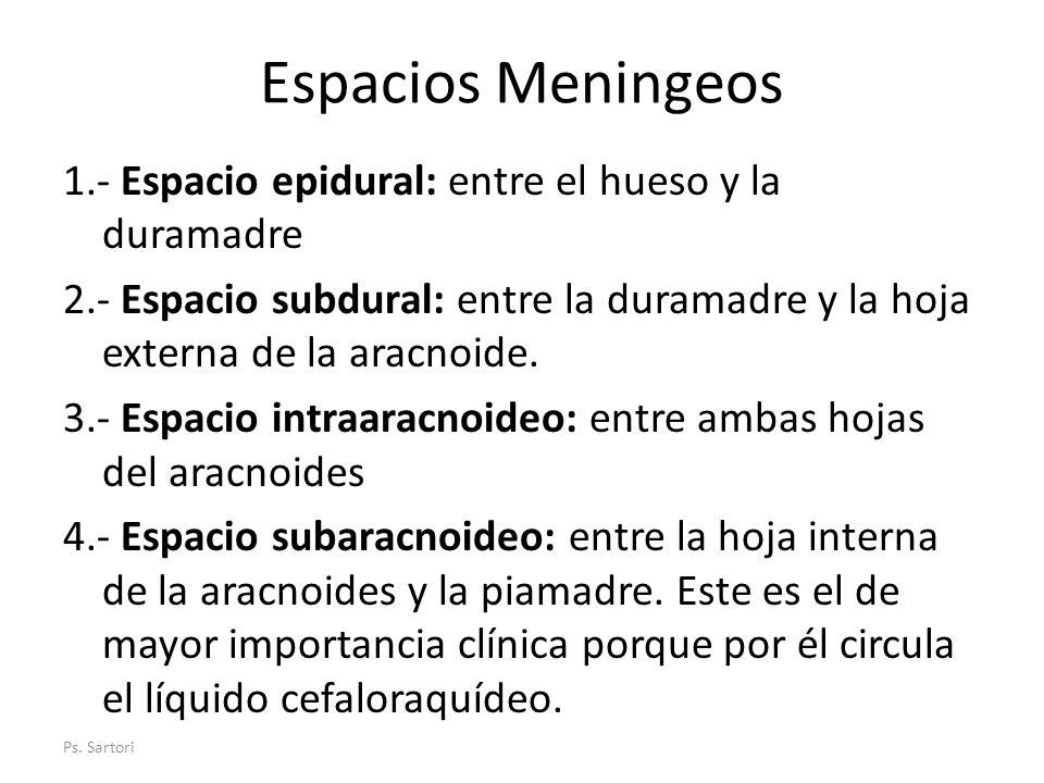 Espacios Meningeos 1.- Espacio epidural: entre el hueso y la duramadre 2.- Espacio subdural: entre la duramadre y la hoja externa de la aracnoide. 3.-
