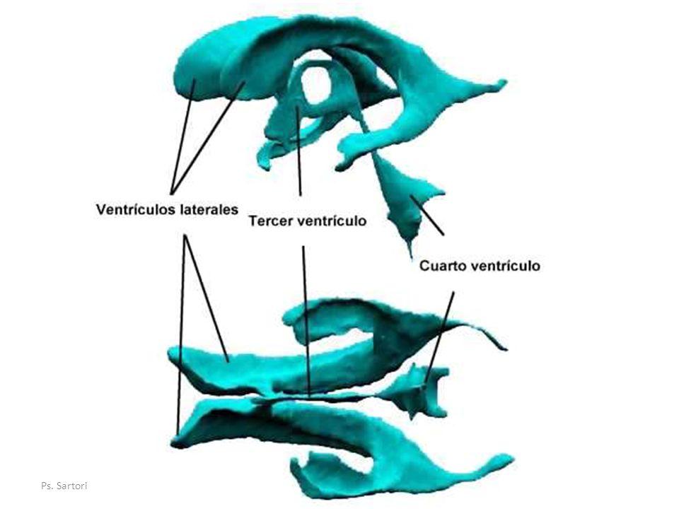 Liquido Cefalorraquídeo Circulación Circulación: espacio subaracnoideo, los ventrículos cerebrales y el canal medular central.