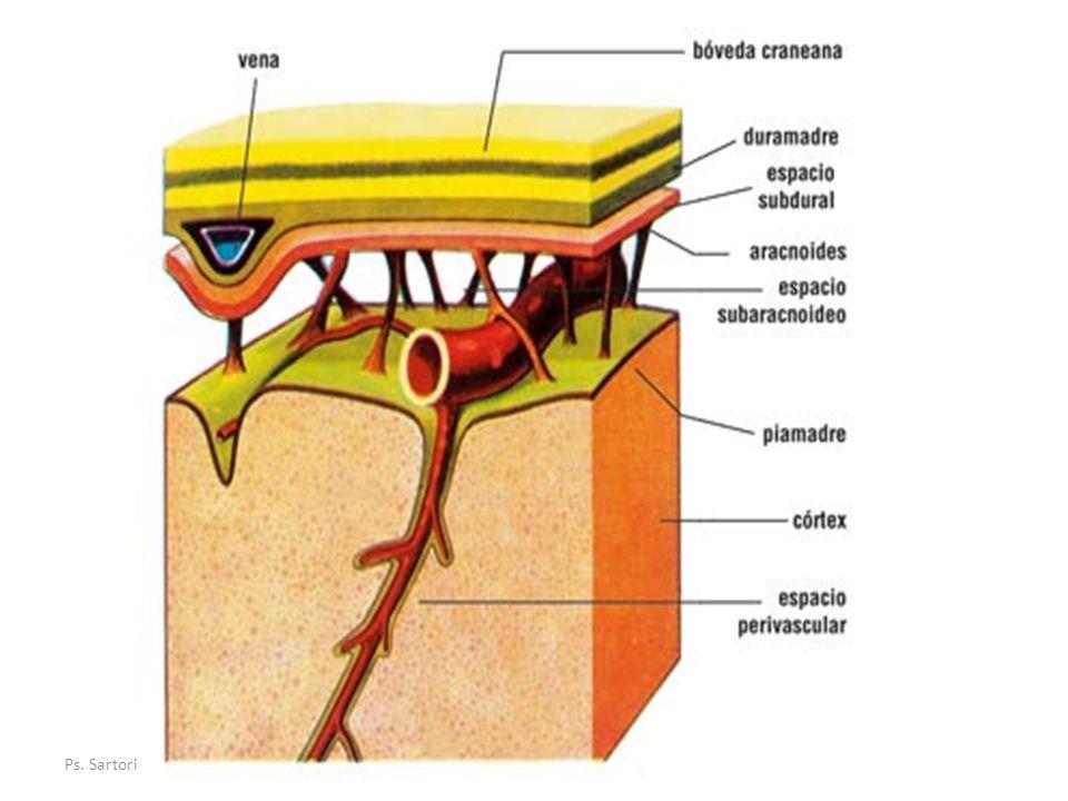 Meninges Encéfalo y Médula Espinal; están recubiertos por Hueso y tres Membranas protectoras.