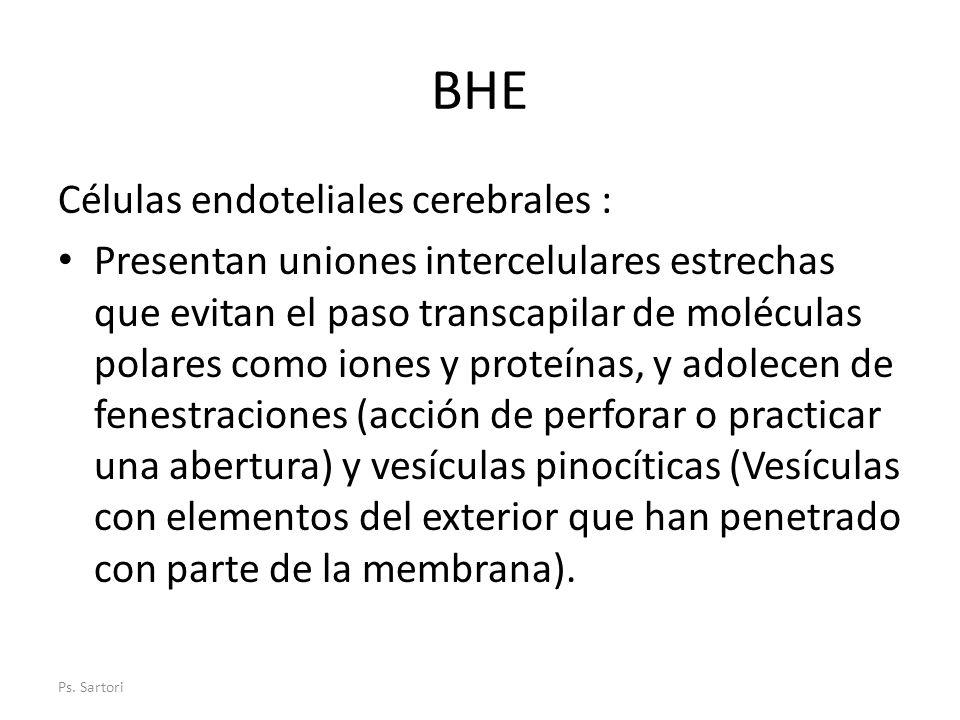 BHE Células endoteliales cerebrales : Presentan uniones intercelulares estrechas que evitan el paso transcapilar de moléculas polares como iones y pro