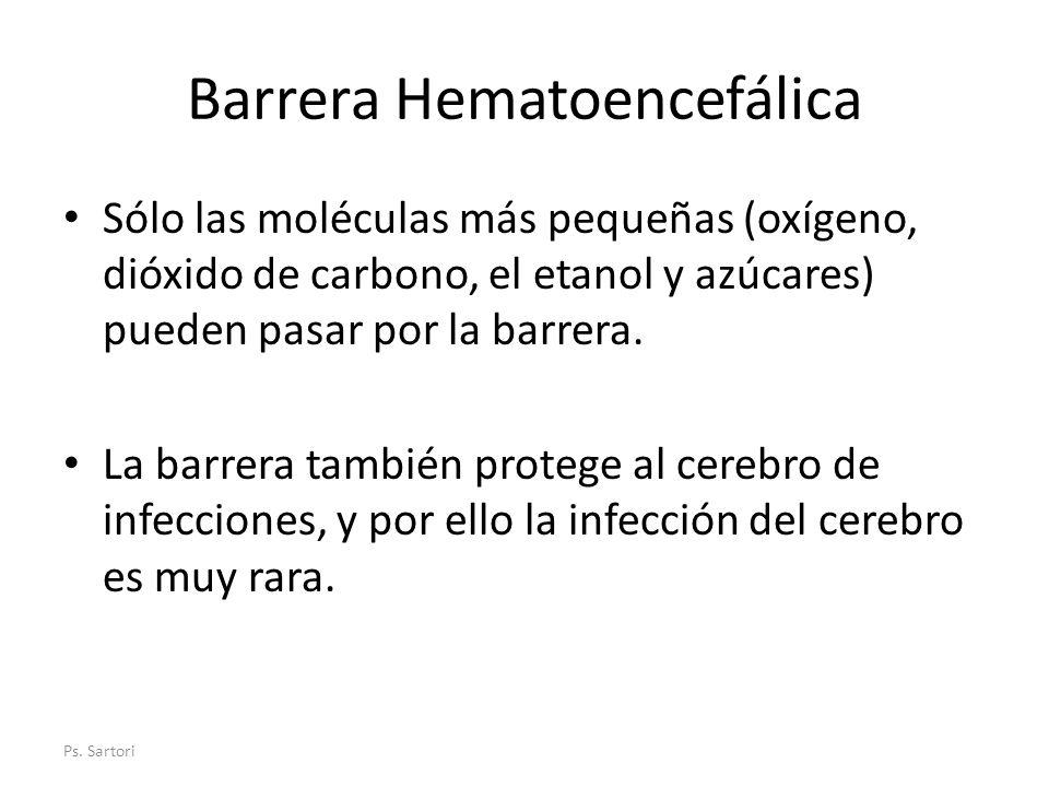 Barrera Hematoencefálica Sólo las moléculas más pequeñas (oxígeno, dióxido de carbono, el etanol y azúcares) pueden pasar por la barrera. La barrera t