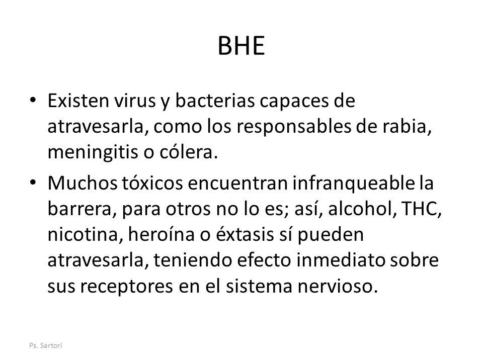 BHE Existen virus y bacterias capaces de atravesarla, como los responsables de rabia, meningitis o cólera. Muchos tóxicos encuentran infranqueable la