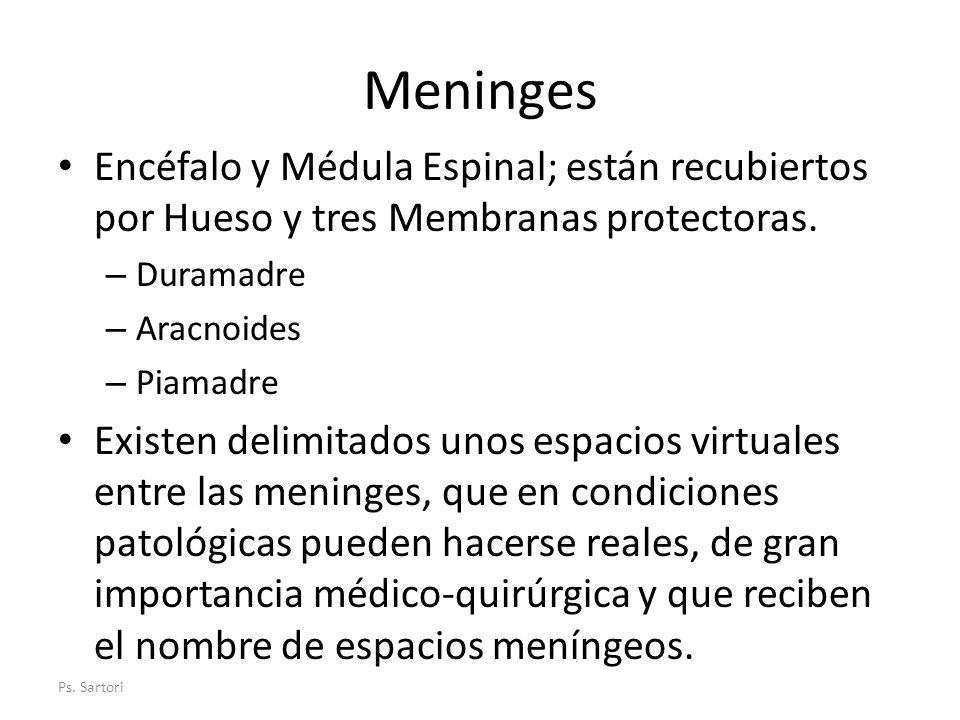 Meninges Encéfalo y Médula Espinal; están recubiertos por Hueso y tres Membranas protectoras. – Duramadre – Aracnoides – Piamadre Existen delimitados