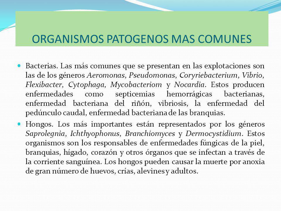 ORGANISMOS PATOGENOS MAS COMUNES Bacterias.